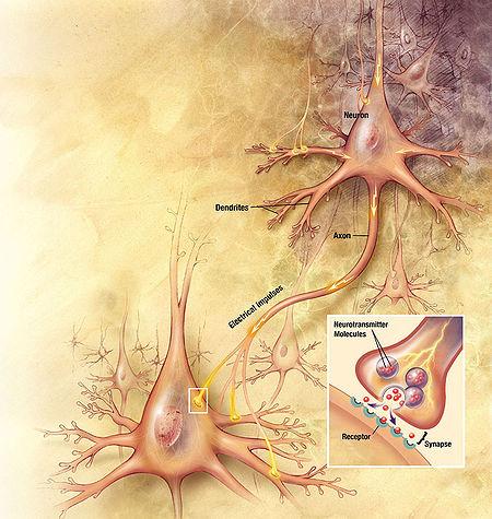 450px-Neurons_big1