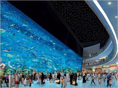 aquarium 20081022_172355_aquarium